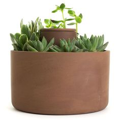 Image result for self watering terracotta