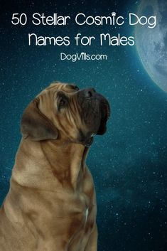 If you're looking for the best cosmic dog names for your out-of-this-world pooch, you'll love our list! Check out the top 100 ideas for males & females!  #dognames #dogadoption #dogadvice #dogvills Puppies Names Female, Female Dog Names, Male Dog Names List, Top Dog Names, Pet Names, Moons Of Uranus, Moon Names, Sales Quotes, Grey Dog