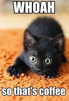 Funny cats: I Have #Cat
