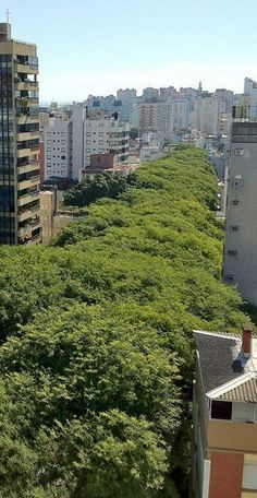 #Rua_Goncalo_de_Carvalho #Street is the most beautiful street in the world, this gorgeous tree-lined street approximately 500 meters in #Porto_Alegre, #Brazil http://en.directrooms.com/hotels/subregion/8-91-1784/