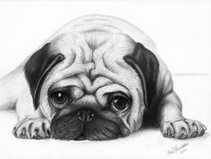 pug puppy sketch - G - Pug Puppies Pencil Drawings Of Animals, Animal Sketches, Drawing Sketches, Face Drawings, Face Sketch, Drawing Animals, Cute Pug Puppies, Cute Dogs, Pug Dogs