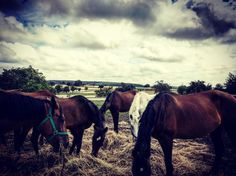 Über 30 Pferde auf dem Pferdehof der Eltern meiner Freundin. Jedes mal aufs neue faszinieren mich diese großen, starken Tiere. Jetzt müsste man nur noch das Reiten lernen und ein Pferd schussfest bekommen und der Jagd auf Pferden würde theoretisch nichts im Weg stehen. Für mehr interessante Bilder und Beiträge folgt @lauraa_eckert @c.reitsportzentrum #horse #horses #horsesofinstagram #horsepower #hunting #hunter #hunt #jagd #jäger #waidmannsheil #jakt #jaktforlivet #awesome #animals…