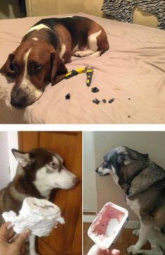 """Wenn Hunde alleine zu Hause sind, fallen ihnen die """"witzigsten"""" Dinge ein. Da wird schon mal gerne das heimische Sofa zerrupft oder der Mülleimer durchsucht. Wichtig ist hier: Nicht schimpfen, wenn man später nach Hause kommt! Ein Hund kann keine Verknüpfung zu seinem """"falschen Verhalten"""" herstellen, wenn er ggf. erst Stunden später dafür mit bösen …"""