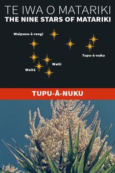 Te Iwa o Matariki Maori Words, Maori Symbols, Marine Plants, Pepper Tree, Winter Sky, Maori Art, The Nines, Star Art, My Land