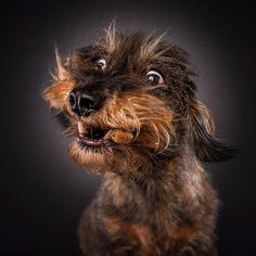20 photos géniales de chiens tentant d'attraper de la nourriture en plein vol. Le rendu est top !