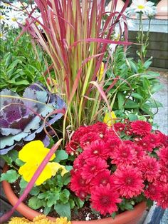 Fall container garden inspiration