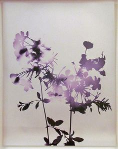 James Welling, Flowers