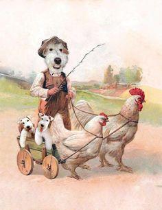 Fox-terriers Club de France.