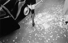 petals/NY (c) Magnum Photos