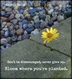 Bloom where you are planted ....