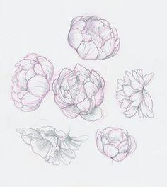 Time Blur : Photo - s_tattoo - Peony Drawing, Peony Painting, Floral Drawing, Watercolor Flowers, Flower Sketches, Art Sketches, Art Drawings, Flower Drawings, Arte Floral