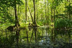 Moor im Grumsiner Forst