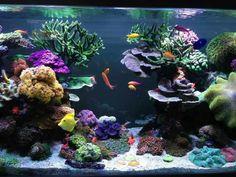 Reef Aquarium, Saltwater Aquarium, Reef Tanks, Under The Sea, The Rock, Swimming Pools, Beautiful Places, Ocean, Tattoo
