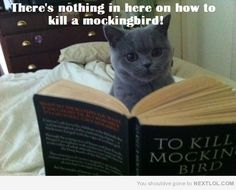 silly cat, to kill a mockingbird is a killer book Cute Cat Gif, Cute Funny Animals, Funny Animal Pictures, Funny Cute, Animal Pics, Cute Cats And Kittens, Kittens Cutest, Kittens Playing, Animal Memes