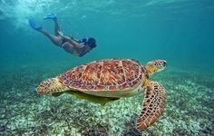What about snorkeling with turtles in Akumal?