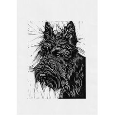Animal Sketches, Linocut Prints, Scottie, All Print, Pet Portraits, Printmaking, Poppy, Hand Carved, How To Draw Hands