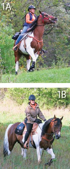 Spooking Behavior in Your Horse