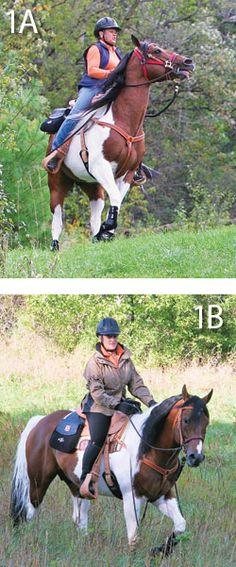 Spooking Behavior in Your Horse