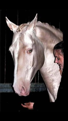 Stunning colored horse! Look at that glow of this Akhal Teke.