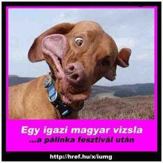 Bad Memes, Funny Memes, Jokes, Animal Memes, Funny Animals, Vizsla, Kawaii, Pictures, Husky Jokes
