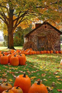 I just love this picture! It gives me a warm, happy feeling. I can't wait for the fall!!