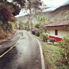 Via rural en Montenegro, Quindio. Foto gracias a http://instagram.com/mecreativemedia