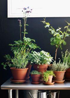 Planten in terracotta