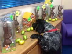 Don't think I can wait until Easter Sunday . Funny Looking Dogs, Sunday, Easter