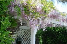 There is something magical about Wisteria!
