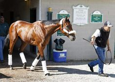 American Pharoah arrived at Pimlico