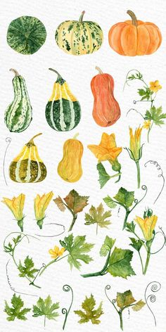 halloween bullet journal Watercolor clipart Watercolor pumpkin clip art Autumn Clip Art Pumpkin Clipart Fall Digital Graphics Halloween clipart Floral clipart You will receive: Autumn Illustration, Halloween Illustration, Botanical Illustration, Halloween Doodle, Halloween Clipart, Watercolor Flowers, Watercolor Art, Fall Drawings, Fall Clip Art