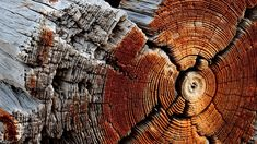 222814-nature-wooden_surface-wood-texture-pattern-trees-circle-dry-dead_trees.jpg (1920×1080)