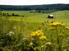 Celebrating farming -Many old Swedish customs and traditions reflect the farming year and the changing seasons.