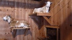 Post with 70 votes and 118 views. TIL goats are cats with hooves Ikea Kids Bed, Goat Fence, Goat Playground, Goat Shed, Keeping Goats, Goat Shelter, Goat House, Goat Barn, Chicken Garden