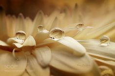 Vanilla dance by aniryazul #nature #photooftheday #amazing #picoftheday