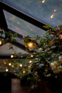 Garden room lighting I love decorating outdoor entertaining areas with lighting, brings life to everything~