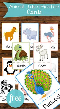 animal identification cards are perfect for toddlers! There are so many ways these could be used for games and education!These animal identification cards are perfect for toddlers! There are so many ways these could be used for games and education! Toddler Learning Activities, Animal Activities, Preschool Activities, Kids Learning, Animal Games For Toddlers, Matching Games For Toddlers, Animal Matching Game, Flashcards For Toddlers, Baby Lernen