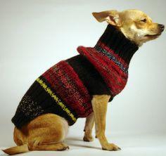 DIAS DE RADIO  luxury brand la bamba dog sweater