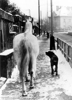 Dog and horse taking a walk by Frantisek Dostal