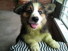Guess who had fun with the neighbor's dog in the freshly mowed grass?