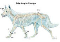 Feline Acupressure Meridian Chart | On The Science of ...
