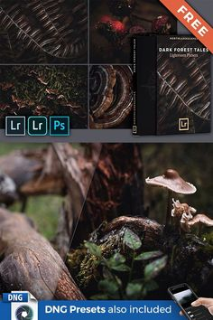 Create dark and atmospheric forest images with only a few clicks in Lightroom Desktop & Mobile. Download this FREE preset pack with 12 professional Lightroom presets for Adobe Lightroom 4-6, CC and Classic (.lrtemplate & XMP presets) as well as the free Lightroom Mobile app for iOS & Android (DNG presets included). Forest Photography, Landscape Photography, Travel Photography, Professional Lightroom Presets, Lightroom 4, Photoshop, Photo Editing, Editing Photos, Camera Raw
