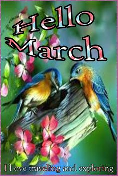 Goodbye February, Hello March I Love traveling and exploring╭ Happy March, February, Hello March Quotes, Pictures Images, Cool Pictures, Months In A Year, Love And Light, Beautiful Images, Inspirational Quotes