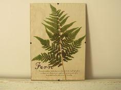 Pressed Herbs- Fern in Frame (5). $15.00, via Etsy.