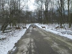This the walking trail in Mill Creek Park in Youngstown, Ohio.   We see  deer, ducks, squirrels, birds galore etc,  year round.