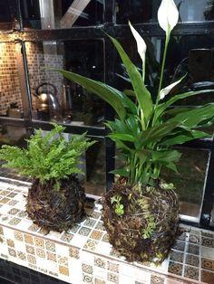 Mini Bonsai, Bonsai Garden, Air Plants, House Plants, Terrarium, Robin, Gardening, Ideas, Gardens