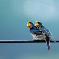 Hungry Birds...photo via 500px