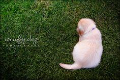 Scruffy Dog Photography