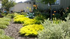 Turf Removal Rebate Drought Friendly Landscape
