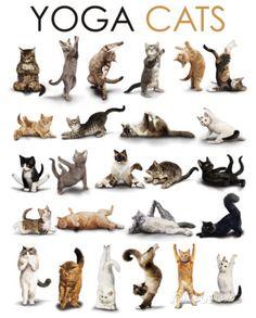 Yoga - Katzen Poster bei AllPosters.de